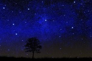 星空に草原と木のシルエットのイラスト素材 [FYI04904591]