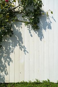緑のある白壁の写真素材 [FYI04904800]