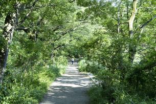 緑があふれる森と遊歩道の風景写真の写真素材 [FYI04904809]