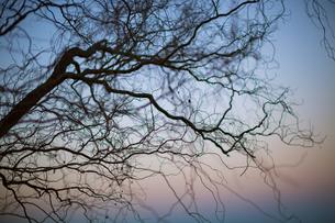 冬の夕方の写真素材 [FYI04904837]