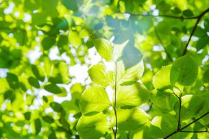 ボケた自然のイメージの写真素材 [FYI04904849]