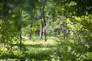 林のイメージ(前ボケ)の写真素材 [FYI04904856]