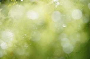 玉ボケ・丸ボケ( 森の木々)背景素材の写真素材 [FYI04904857]