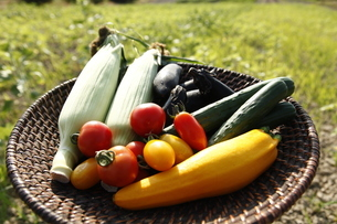 夏野菜の写真素材 [FYI04905106]