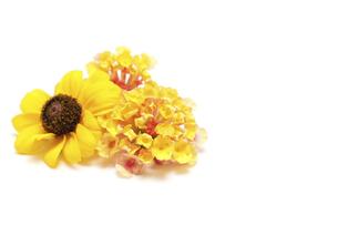 白背景のランタナとルドベキアの花首の写真素材 [FYI04905186]