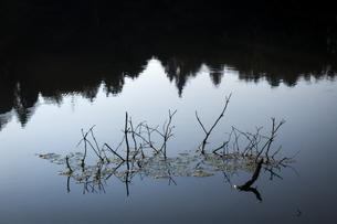 倒木の枝が水面に現れるの写真素材 [FYI04905617]