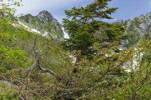 新緑とタカネザクラ咲く千畳敷カールと宝剣岳の写真素材 [FYI04905807]
