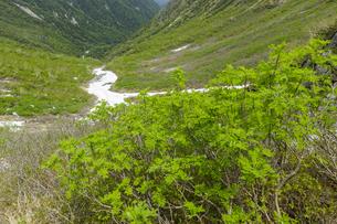 中央アルプス宝剣岳〜濃ヶ池間の風景の写真素材 [FYI04905837]