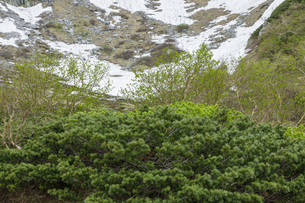 残雪と新緑の千畳敷カールの写真素材 [FYI04905900]
