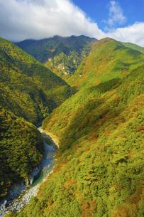 【徳島県】山肌が赤く色づく秋の祖谷渓の様子の写真素材 [FYI04906352]
