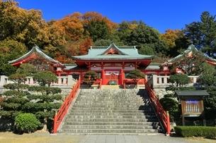 紅葉の織姫神社の写真素材 [FYI04906400]