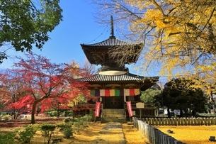 鑁阿寺(ばんなじ)の多宝塔と紅葉の写真素材 [FYI04906429]