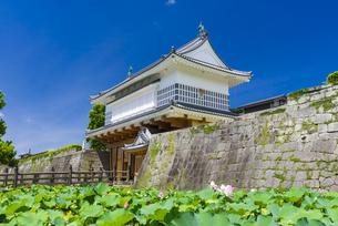 御楼門と鶴丸城跡の写真素材 [FYI04906526]