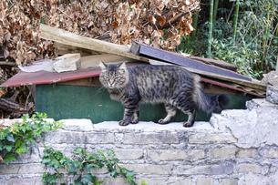ローマの猫 ヴィッラ・トルロニア公園 の写真素材 [FYI04907335]
