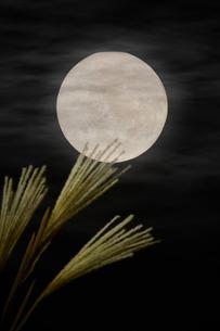 夜空の満月とススキの写真素材 [FYI04908345]