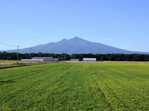 斜里岳と畑の写真素材 [FYI04908874]