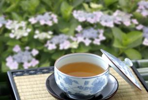 甘茶の写真素材 [FYI04909283]