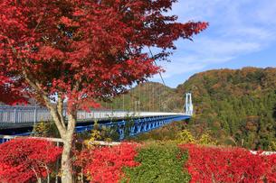 竜神大吊橋の紅葉の写真素材 [FYI04909579]