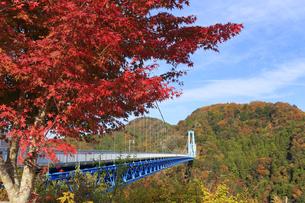 竜神大吊橋の紅葉の写真素材 [FYI04909582]