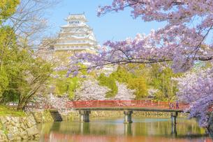 関西の風景 姫路市 春の姫路城の写真素材 [FYI04909875]