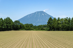 北海道 夏の羊蹄山の風景の写真素材 [FYI04910041]