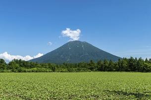 北海道 夏の羊蹄山の風景の写真素材 [FYI04910056]