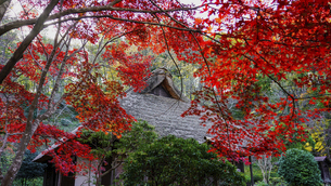 旧荻野家住宅、薬師池公園の古民家と紅葉(東京都町田市)の写真素材 [FYI04910077]
