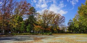 将軍池公園の紅葉(東京都世田谷区)の写真素材 [FYI04910164]