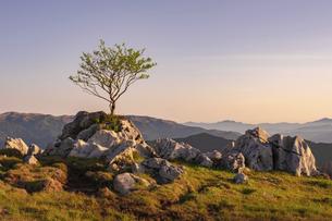 【旅行】岩の上に木が生えた朝の四国カルストの風景の写真素材 [FYI04910195]