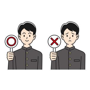 ○×の札を上げる男子高校生のイラスト素材 [FYI04910497]