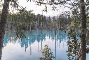 美瑛町・青い池の写真素材 [FYI04910648]