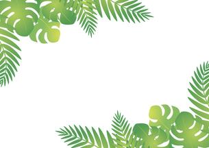 モンステラとヤシの葉のフレームのイラスト素材 [FYI04910693]