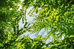 明るい森の木々の写真素材 [FYI04910744]