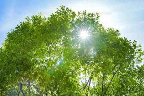 明るい森の木々の写真素材 [FYI04910745]