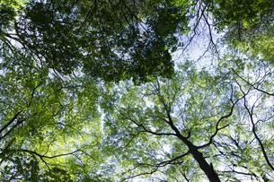 明るい森の木々の写真素材 [FYI04910754]