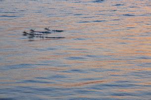 夕陽を反射して輝く海の写真素材 [FYI04910787]