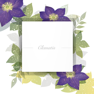 クレマチスの花のイラスト背景のイラスト素材 [FYI04910864]