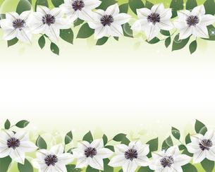 白いクレマチスの花背景イラストのイラスト素材 [FYI04910961]