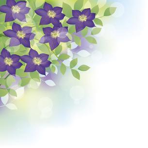 紫のクレマチスの花背景イラストのイラスト素材 [FYI04910962]
