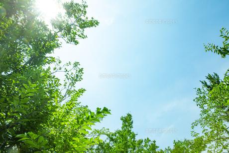 青空と新緑の写真素材 [FYI04911159]