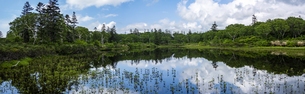 【パノラマ】神仙沼自然休養林の神仙沼の写真素材 [FYI04911170]