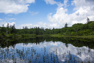 神仙沼自然休養林の神仙沼の写真素材 [FYI04911171]