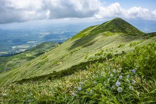 ニセコアンヌプリ山頂とエゾフウロの花の写真素材 [FYI04911209]