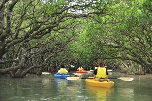 マングローブ原生林とカヌー 奄美大島の写真素材 [FYI04911459]