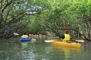 マングローブ原生林とカヌー 奄美大島の写真素材 [FYI04911460]