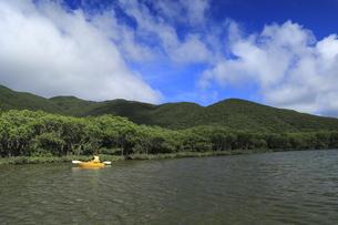 マングローブ原生林とカヌーの写真素材 [FYI04911462]