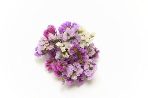 スターチスの花束の写真素材 [FYI04912092]