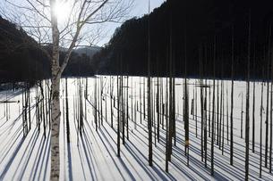 早朝の自然湖の写真素材 [FYI04912546]