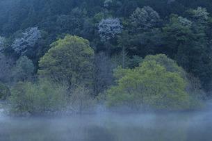 夜明け前の室生湖の写真素材 [FYI04912554]