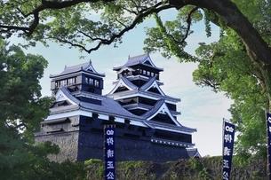 熊本城 大小天守閣の写真素材 [FYI04912866]